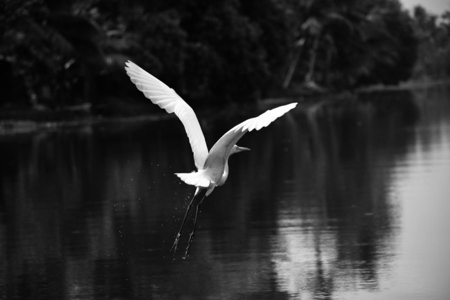 Bird near a lake flying away