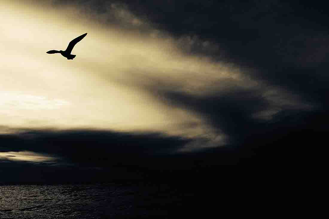 Dark image of a bird flying over a water body at dusk
