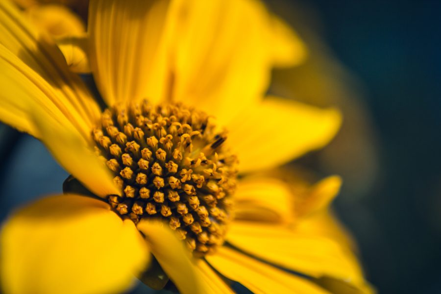 image of a sunflower which has a very little part of it in focus during the day