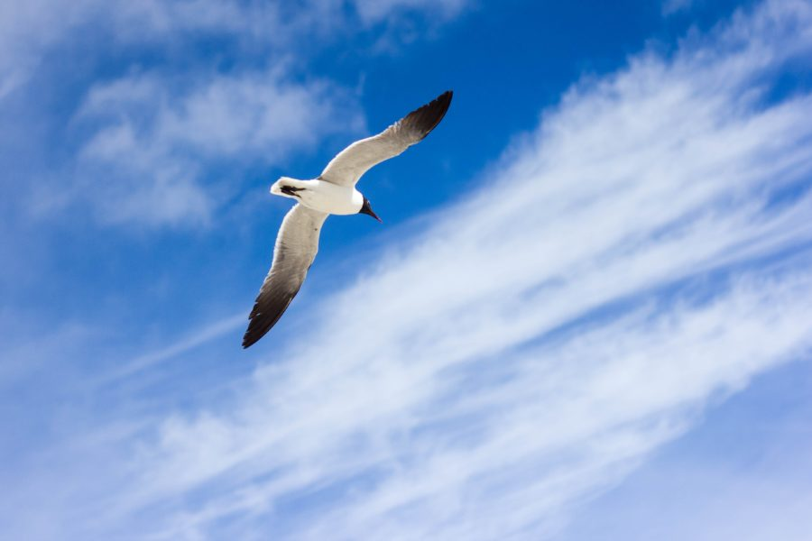 white sea bird flying on a windy day