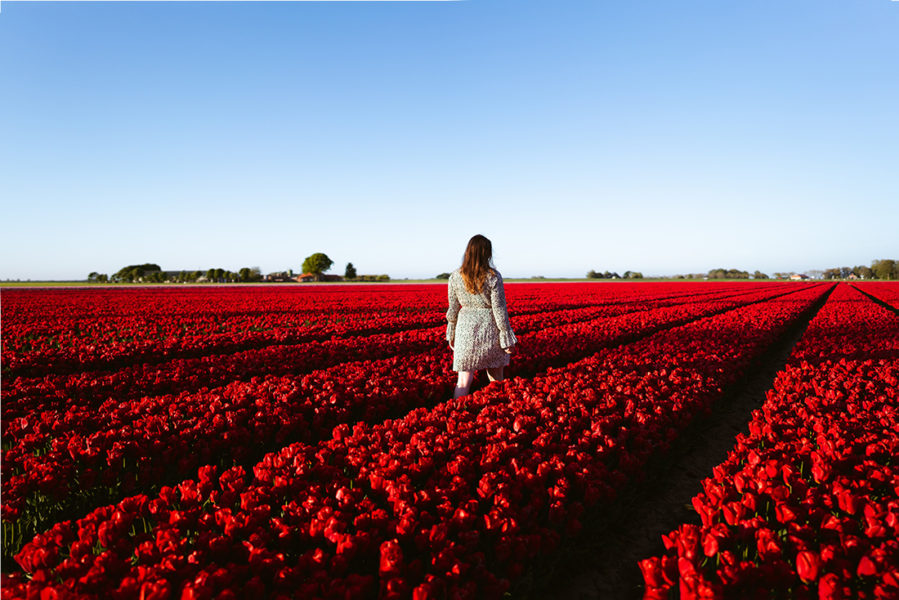 Woman standing in field of red tulips