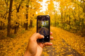 Shooting The Falling Tree Leaves In a forest with yellow leaves all around using a cell phone camera on an iPhone