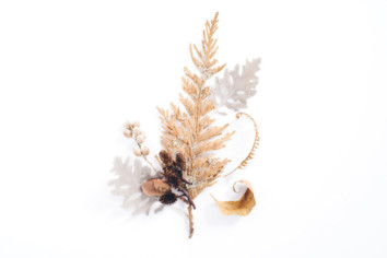 Few twigs and leaves of coniferous trees on a white desk